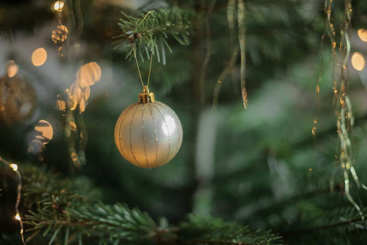 Las plantas de navidad necesitan cuidados especiales