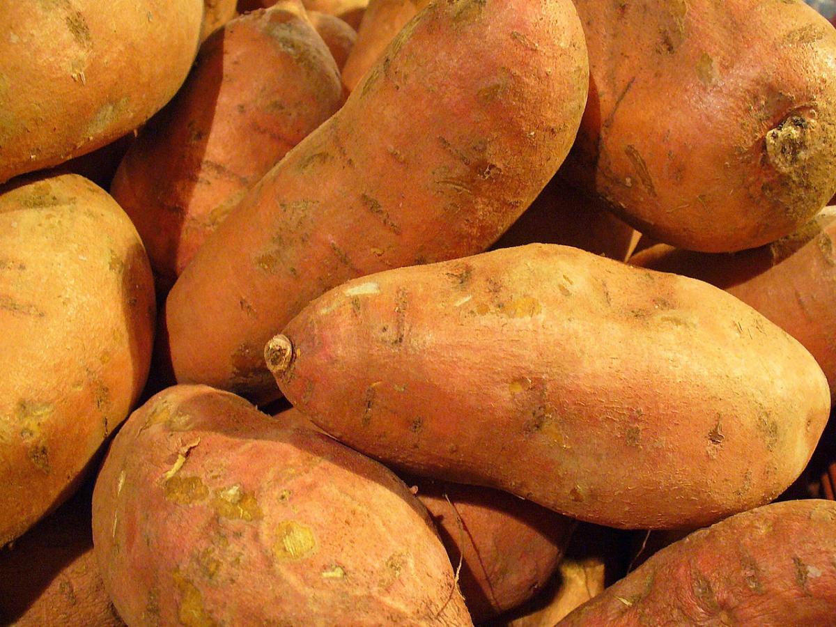 Las batatas son raíces aptas para su consumo