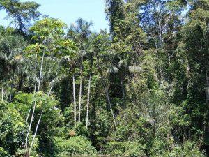 En el Amazonas hay una gran variedad de especies de plantas