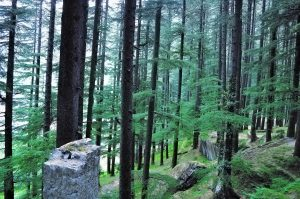 En Asia hay una gran variedad de árboles