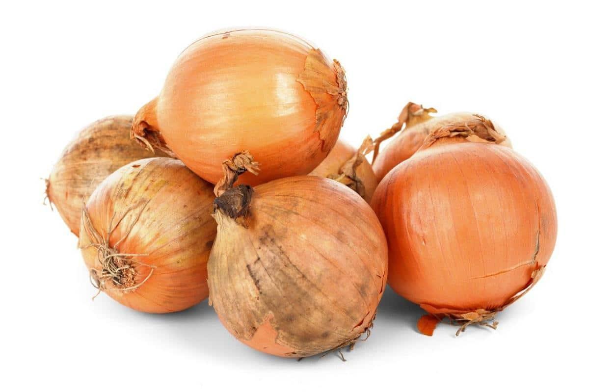 Las cebollas son bulbos que pueden consumirse sin problemas