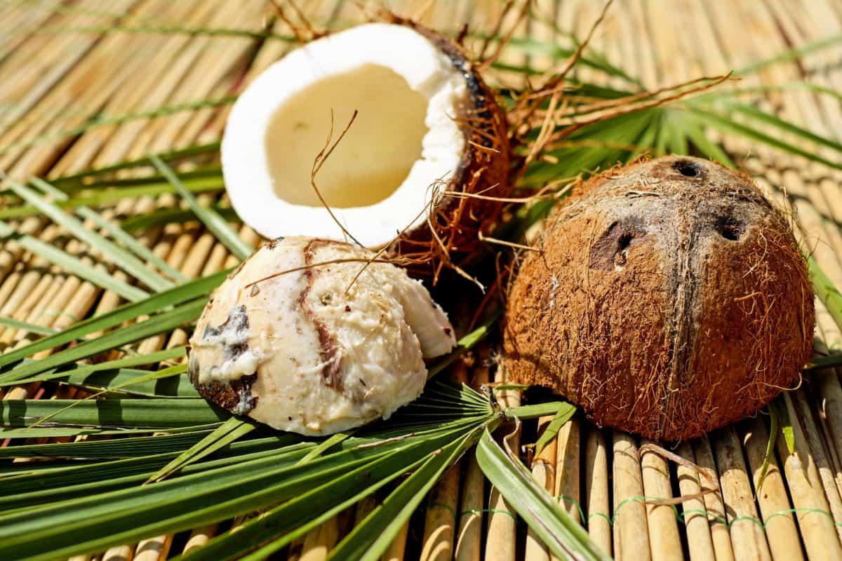 El coco es comestible