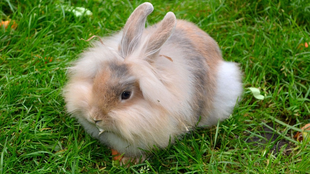 conejo de mascota en el jardin