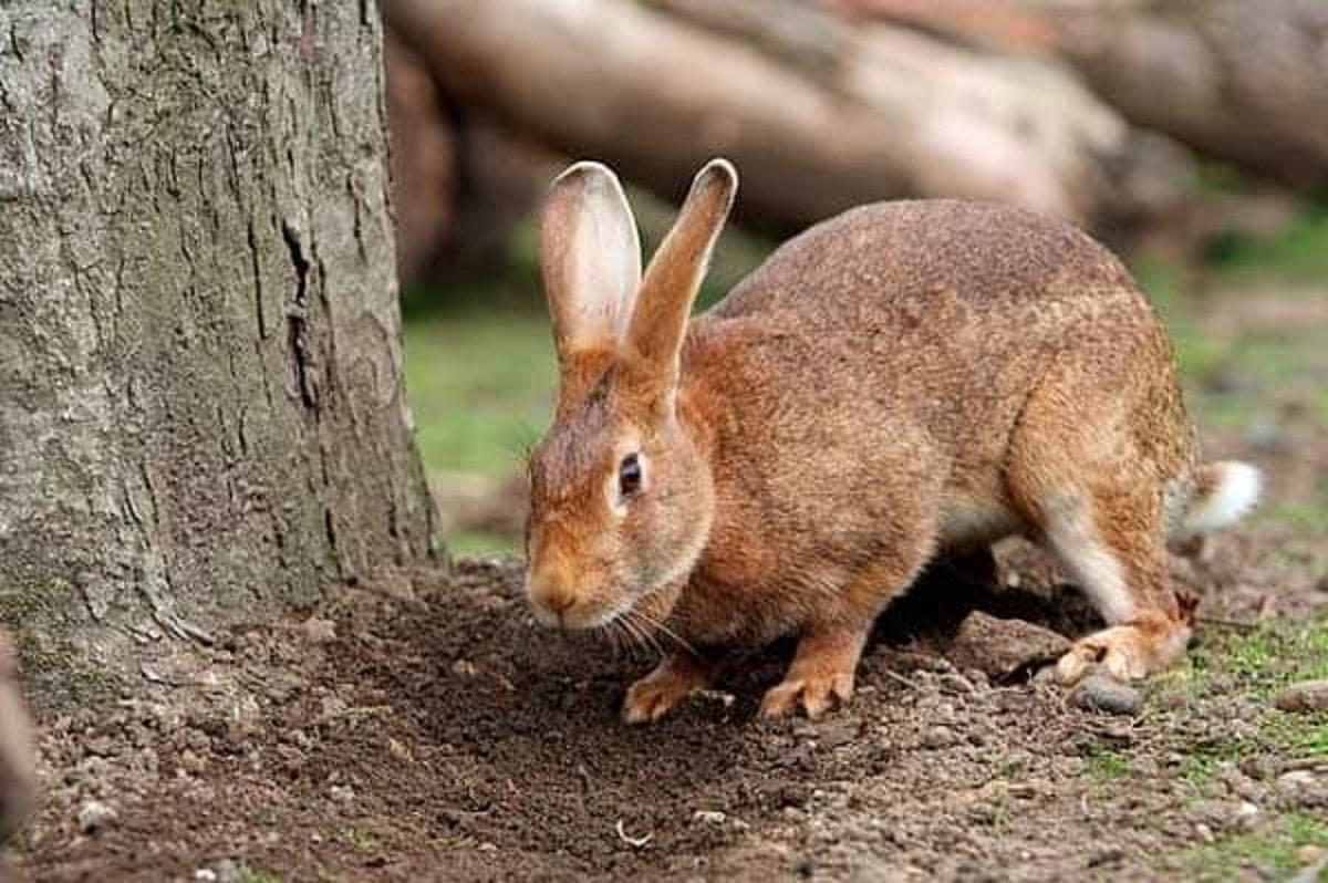 conejos en el jardin