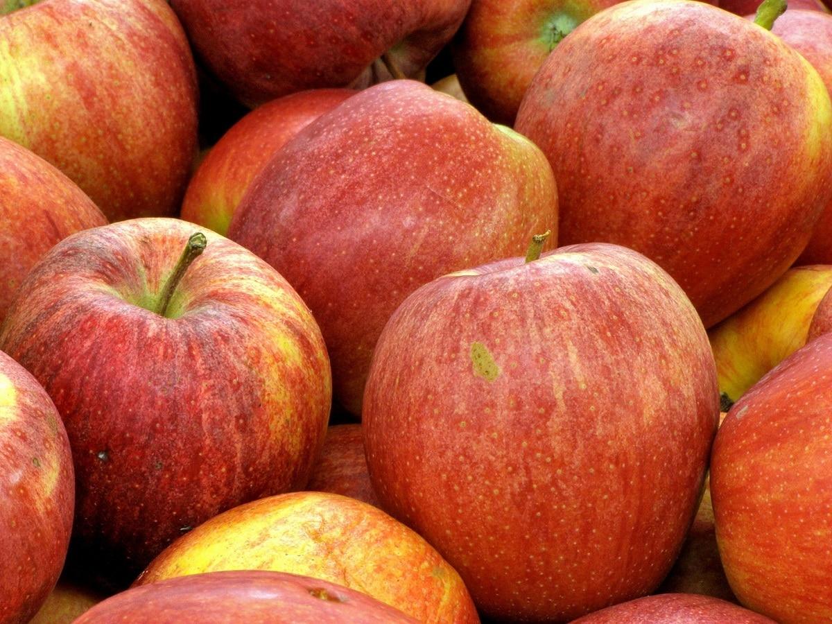 cutlivo de la manzana royal gala