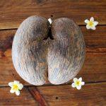 El fruto de la lodoicea es grande