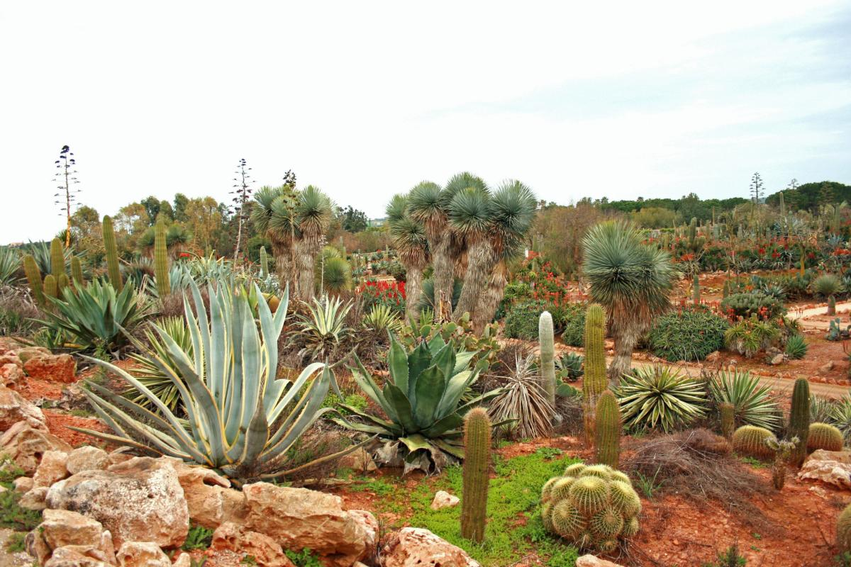 En el Botanicactus hay un gran jardín de suculentas