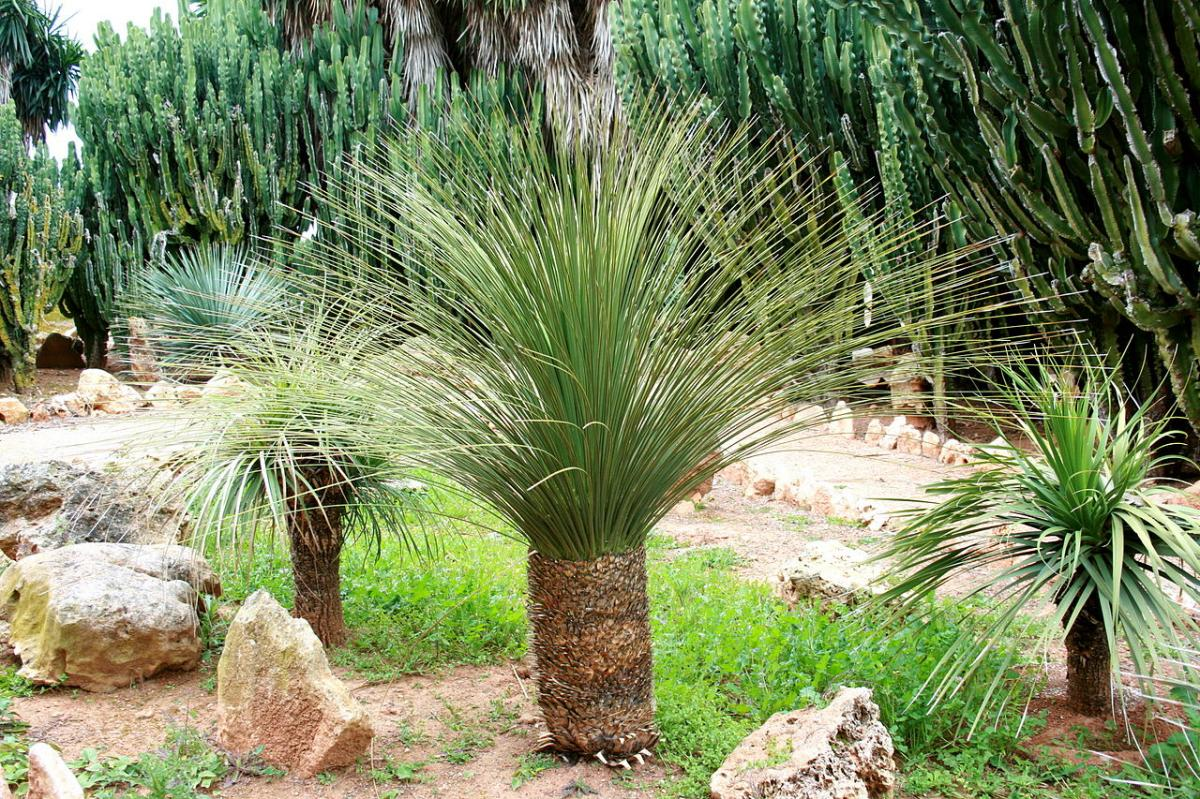 Las plantas se adaptan a las condiciones medioambientales