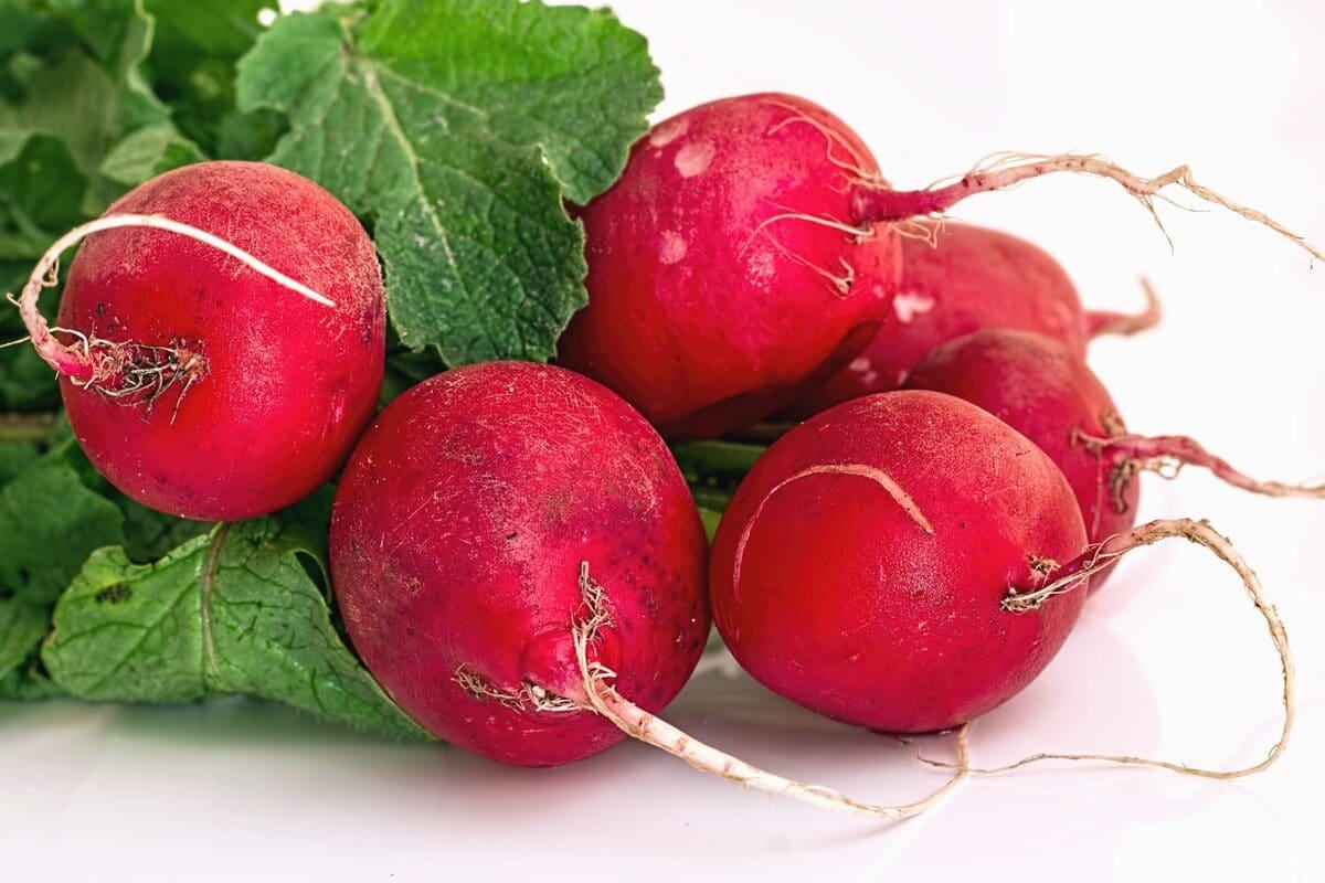 Las raíces del rábano son bulbosas y rojas