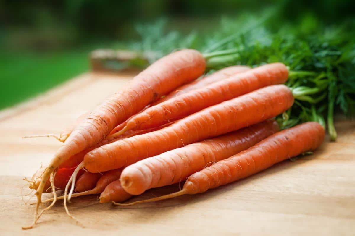 Las zanahorias son raíces tuberosas y largas