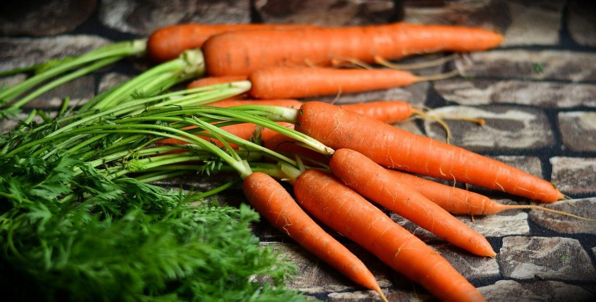 Las zanahorias son un tipo de hortaliza de raíz