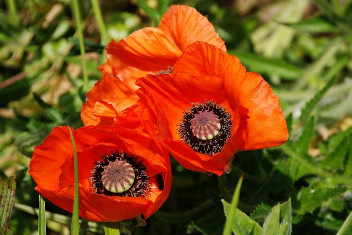 Las semillas de flores suelen ser pequeñas