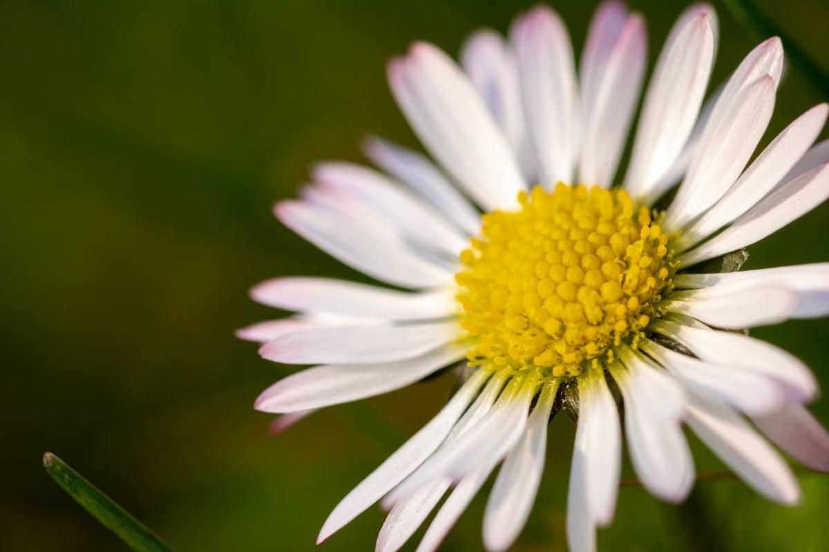 Las flores se producen gracias a la nutrición de las plantas