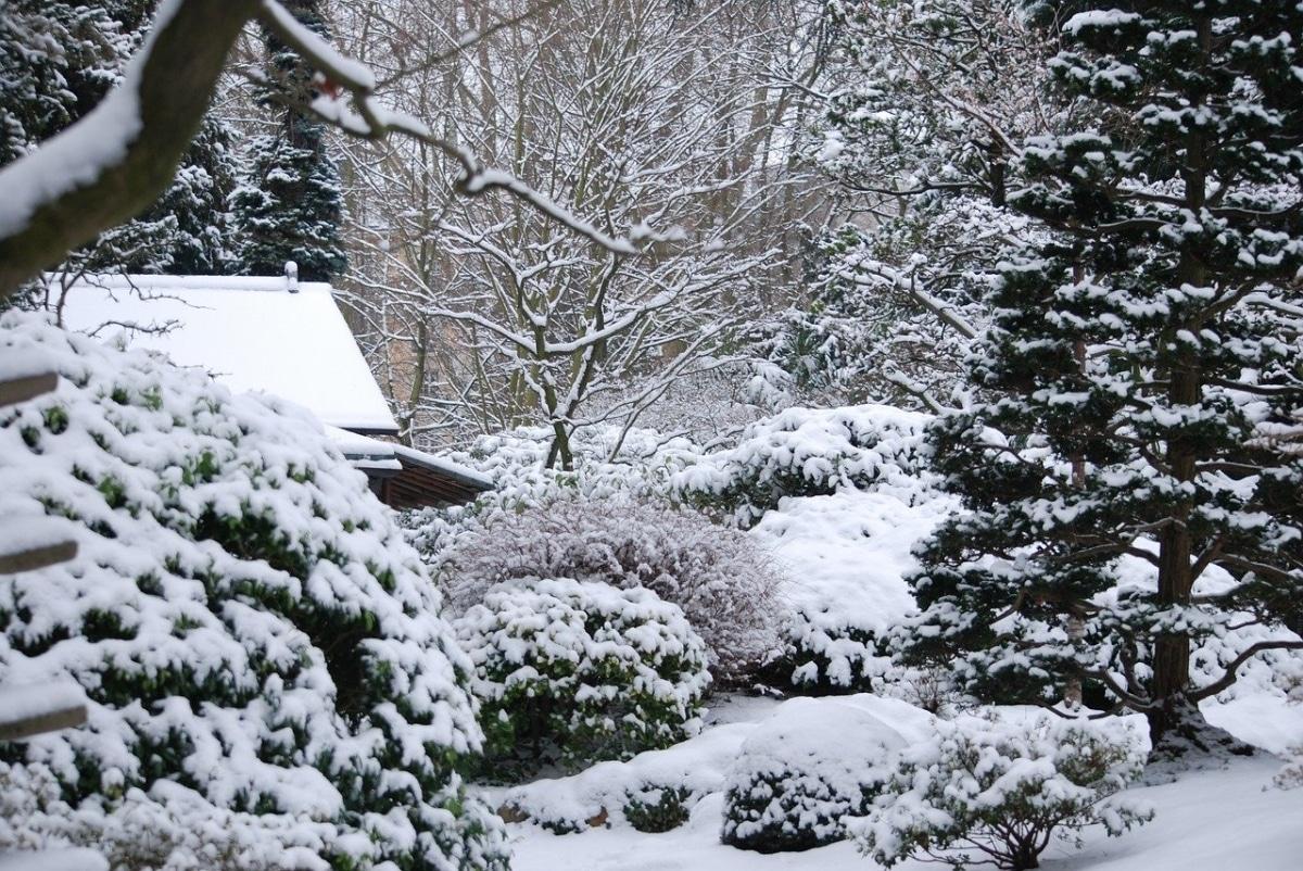 Hay muchas plantas de exterior que sobreviven al invierno