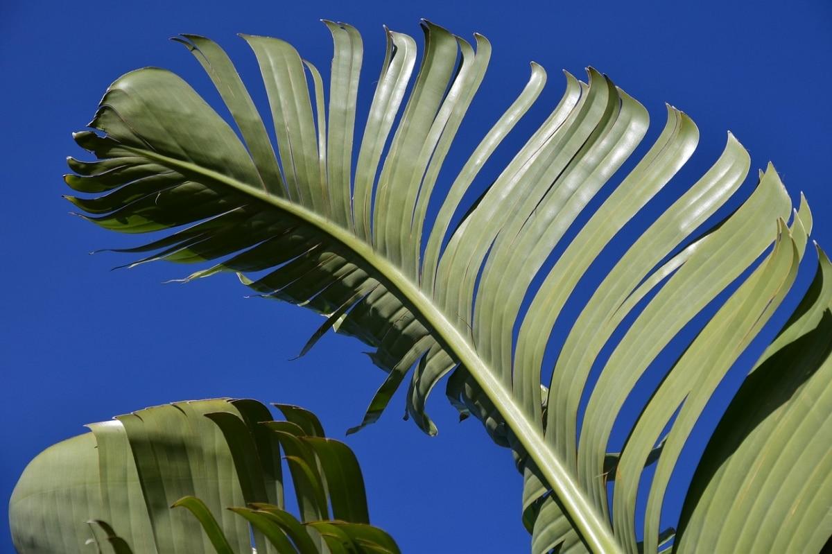 Las puntas de las hojas se secan por varios motivos