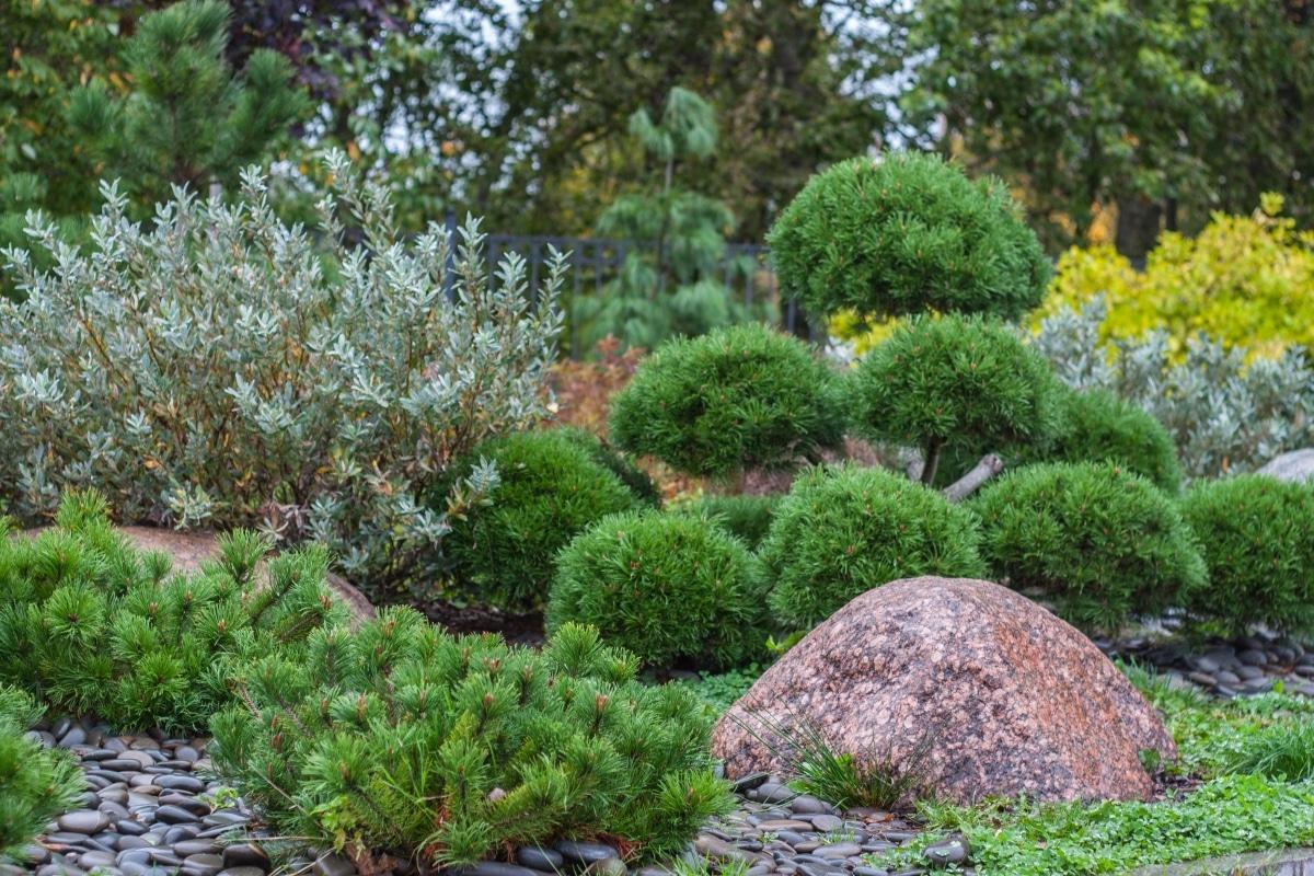 Hay muchos tipos de arbustos para jardín
