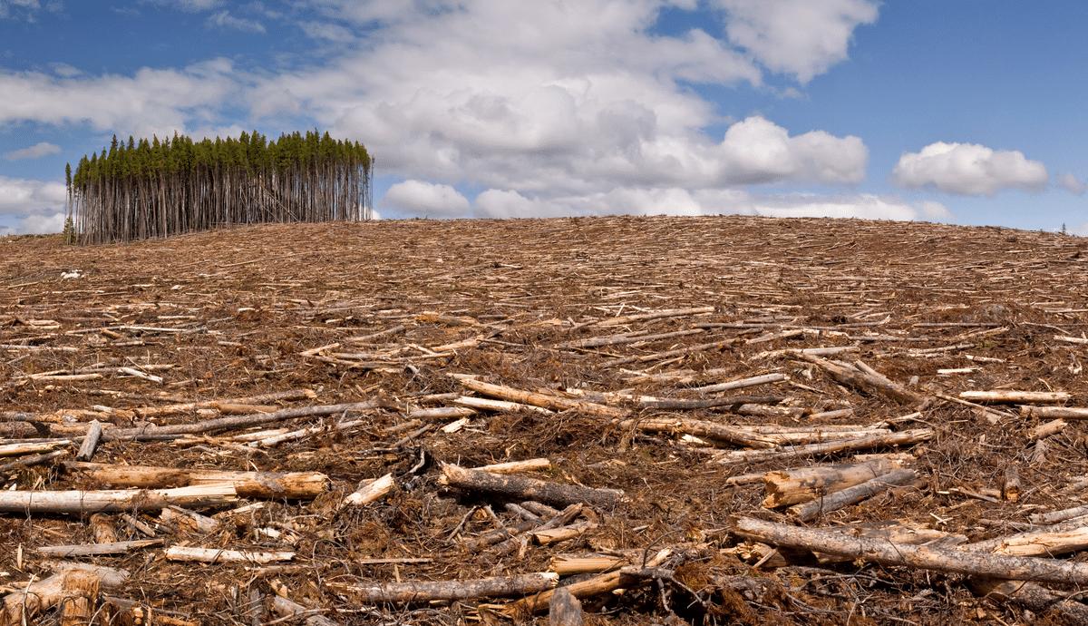 bosques talados