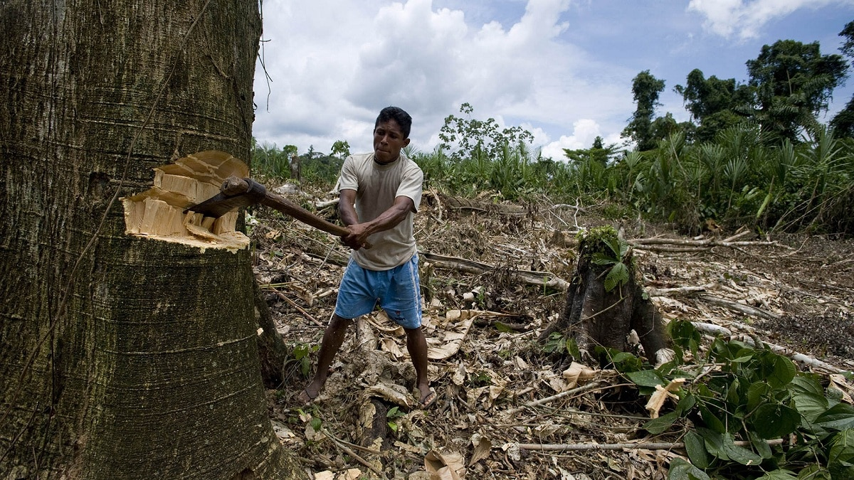 deforestacion mundial