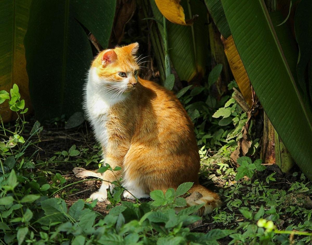 evitar gatos en el jardin
