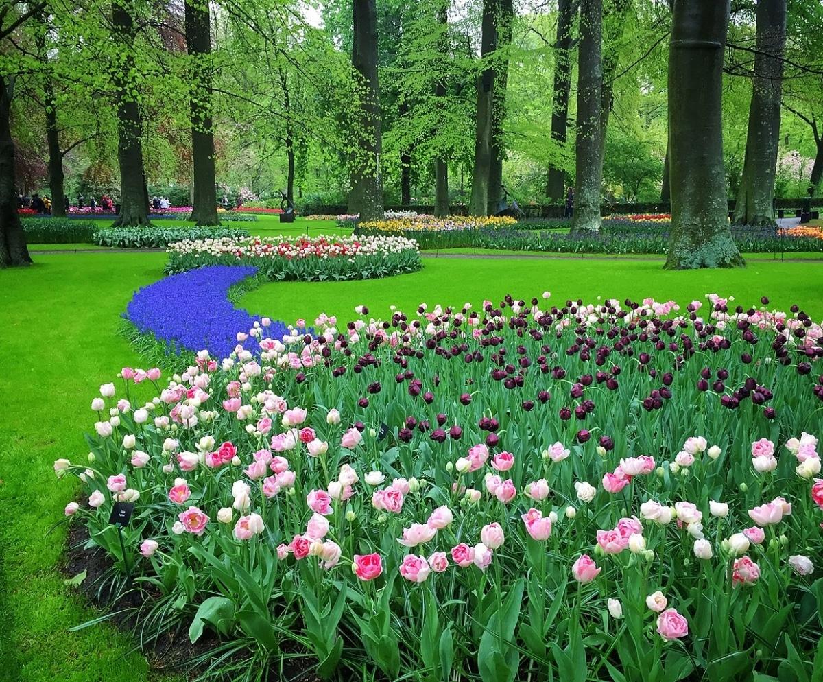 Los Jardines de Keukenhof están en Países Bajos
