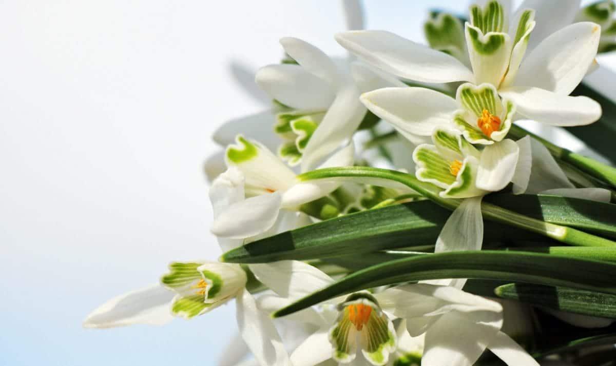 Hay muchas plantas que absorben la humedad del aire