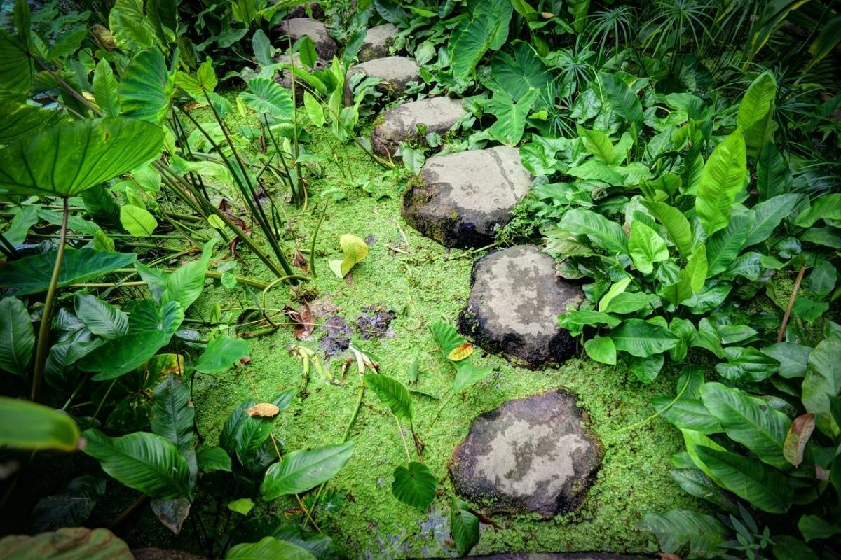 Un camino de piedras en el estanque queda muy bien