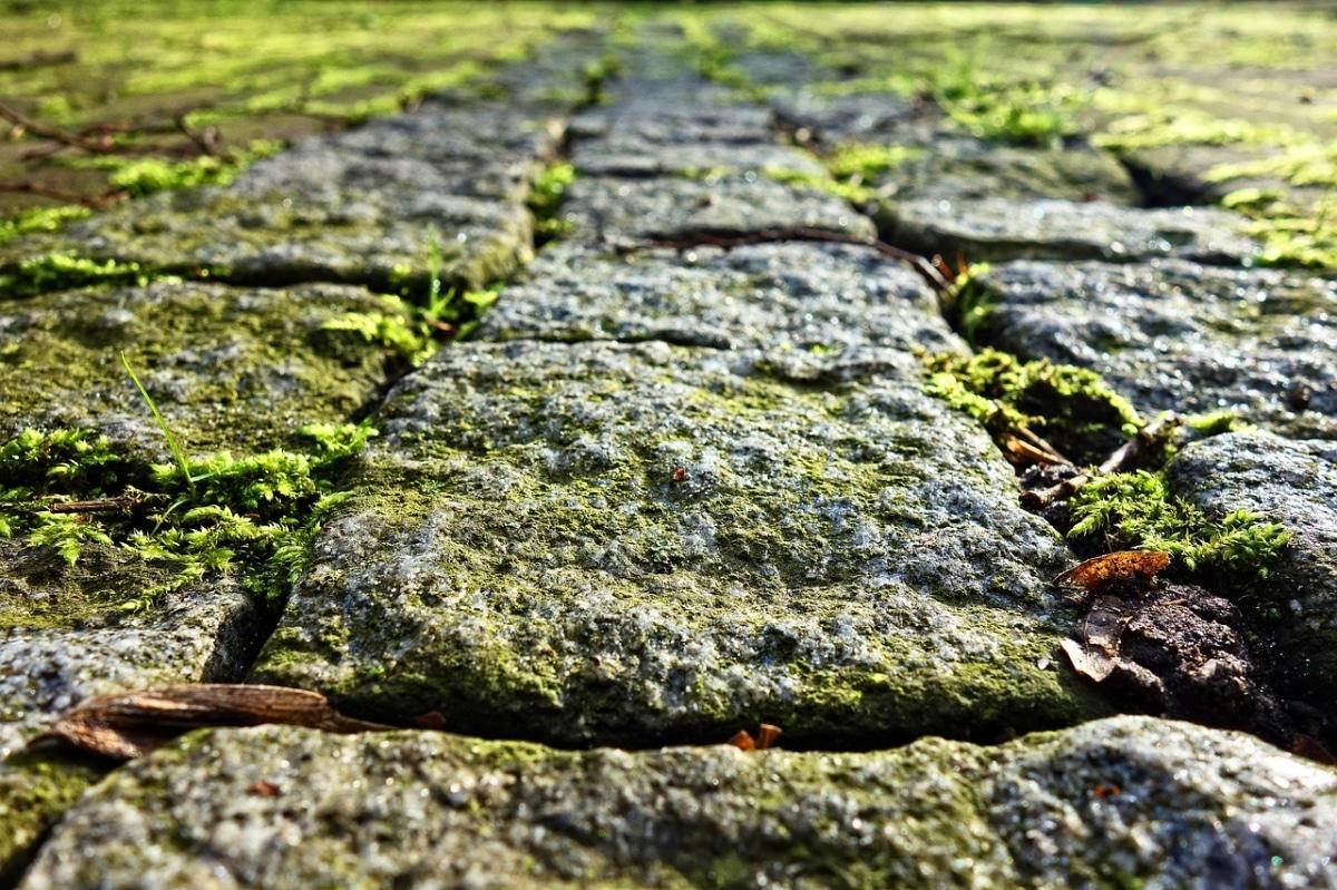 Colocar rocas en vez de piedras en aquellos jardines rústicos será muy bello