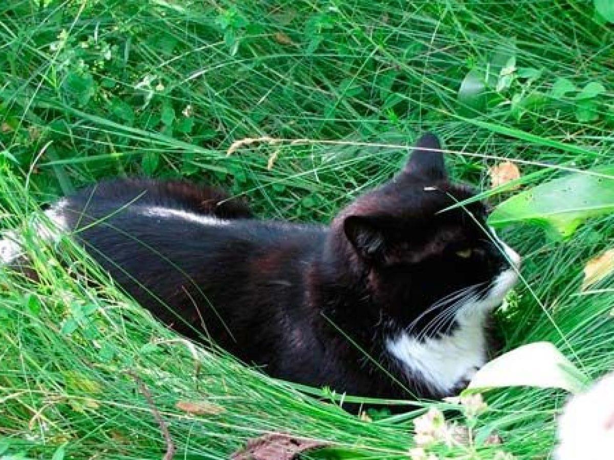 plantas repelentes para gatos