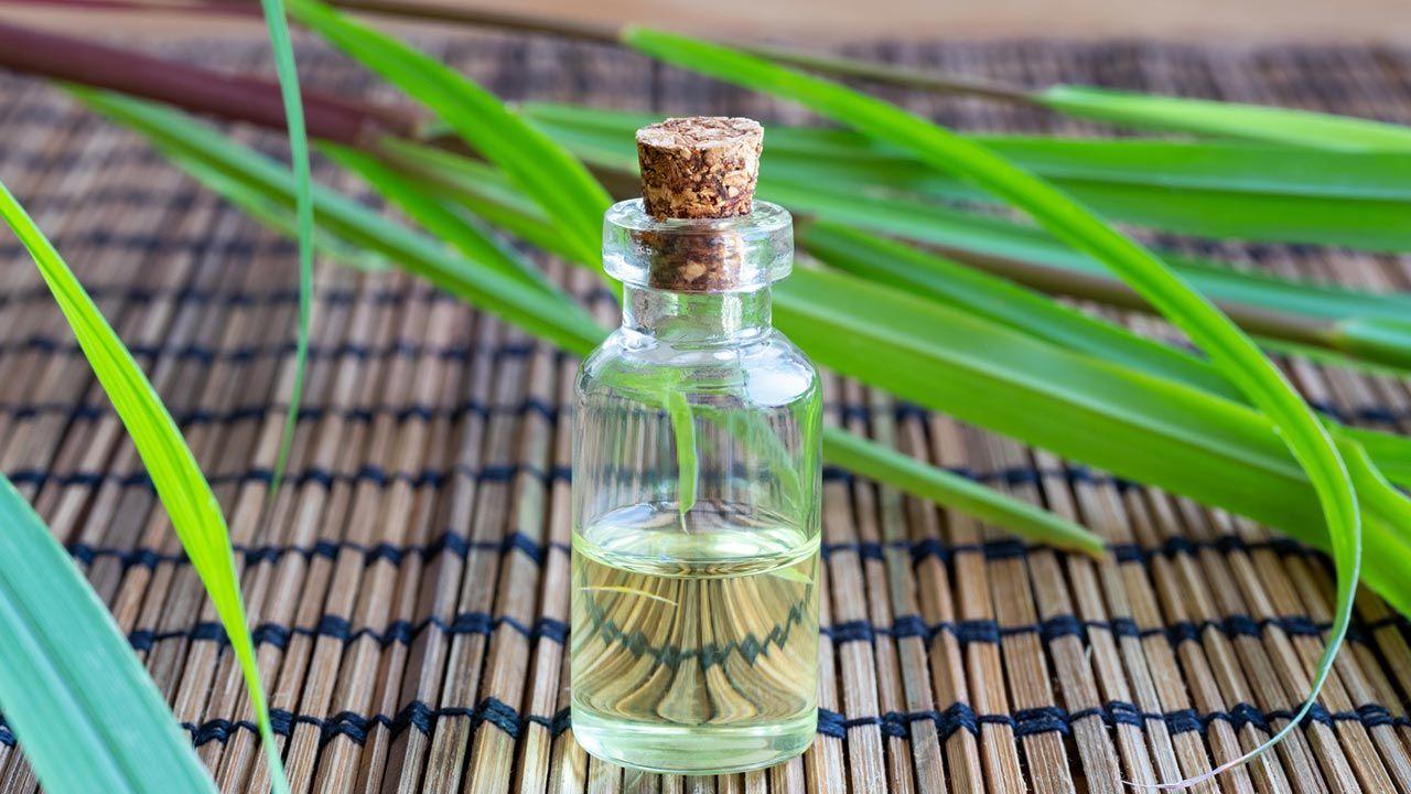 aceite esencial con propiedades medicinales