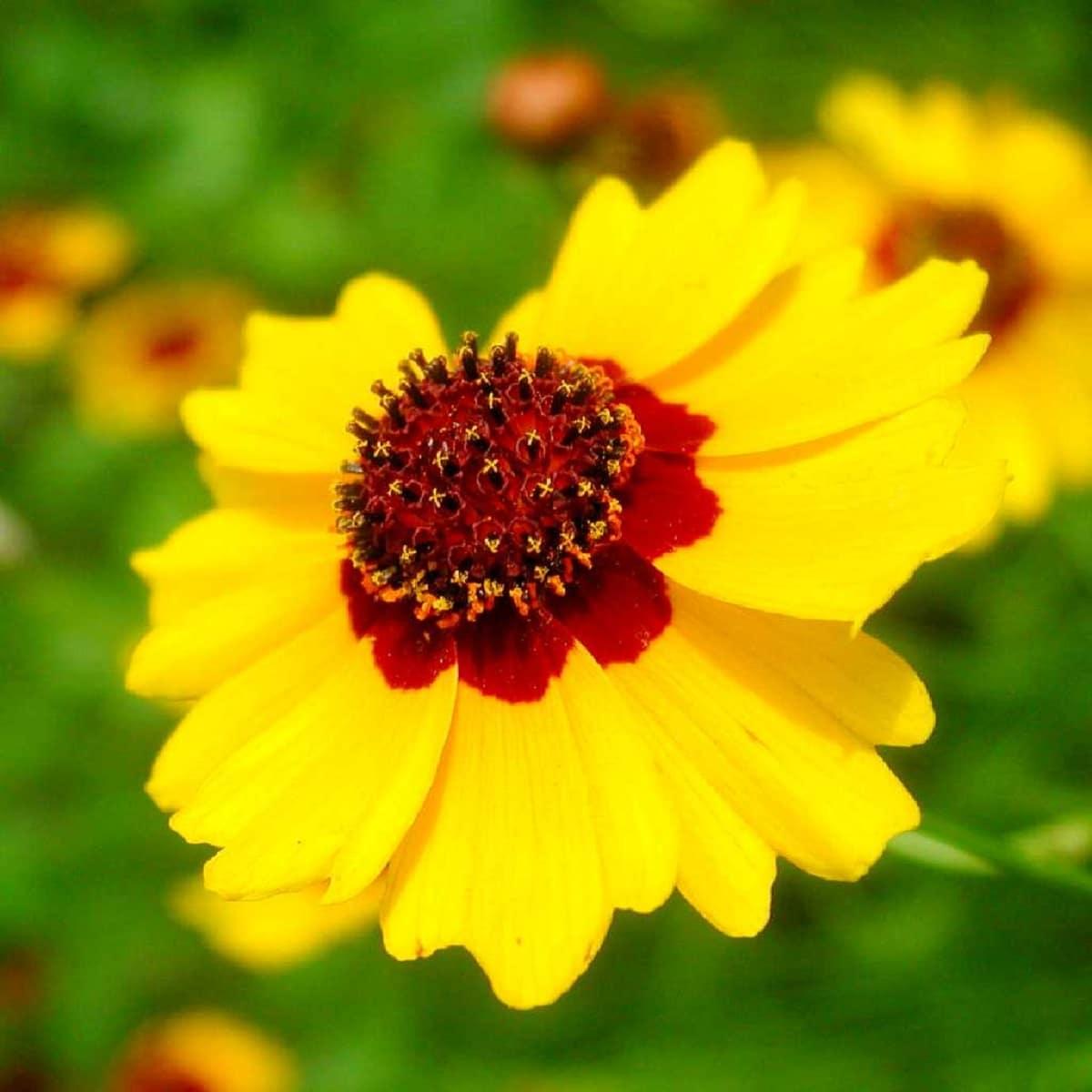 belleza de las flores de la estrella del norte