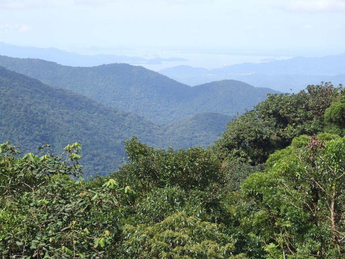 bosque subtropical con lluvias abundantes