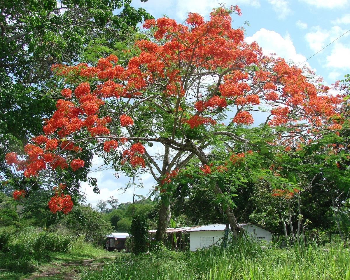 La maduración es cuando una planta florece