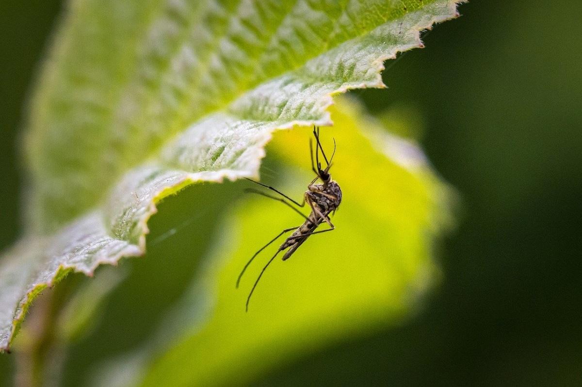 Las plantas pueden tener mosquitos si hay exceso de humedad