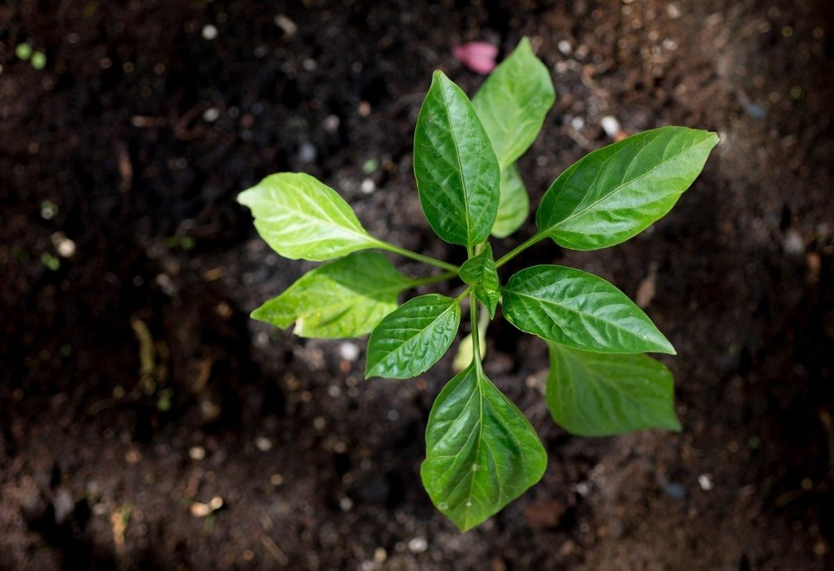 Las plantas jóvenes hacen lo imposible por crecer