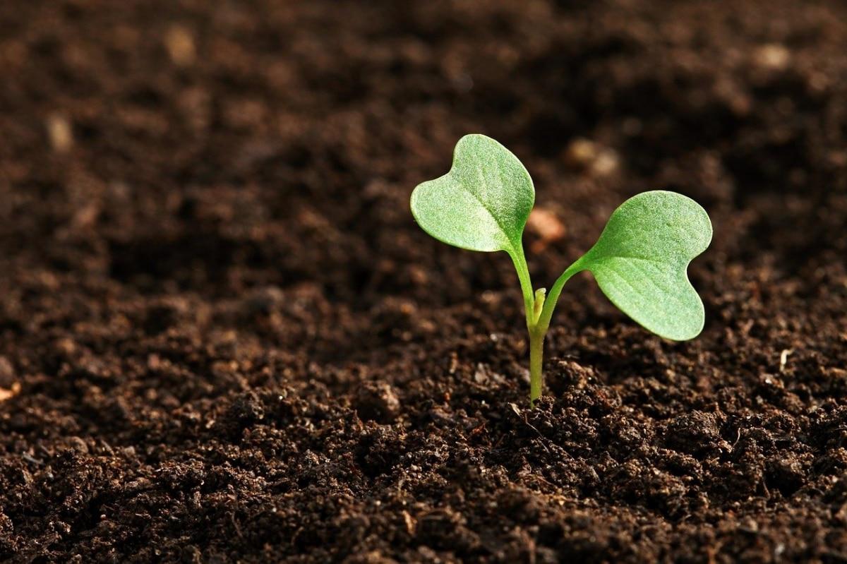 Sembrar y plantar no son lo mismo