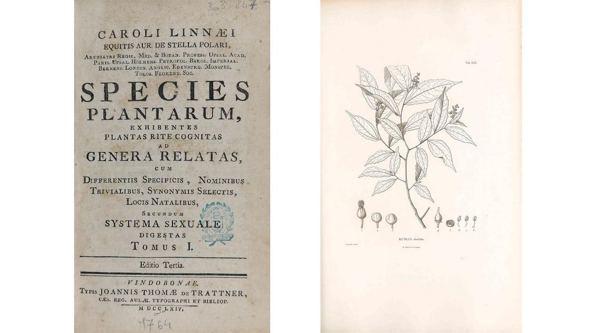 """El libro """"Species plantarum"""" es un recopilatorio de todas las especies de plantas conocidas por Carlos Linneo"""