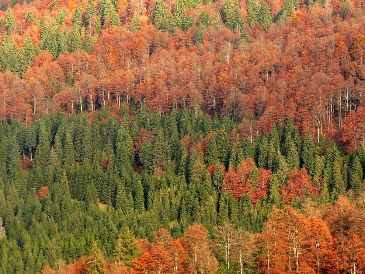 variedad de los tipos de bosques segun sus hojas