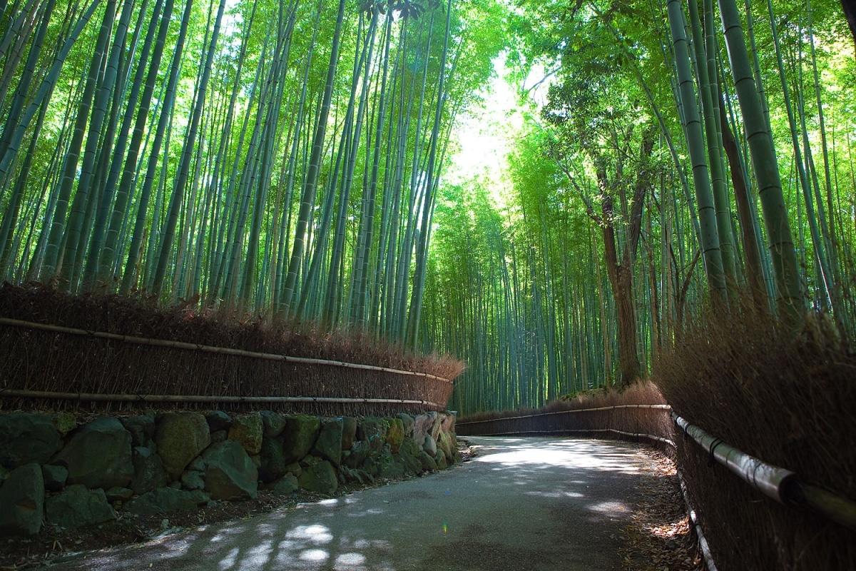 El bosque de bambú de Kioto es impresionante