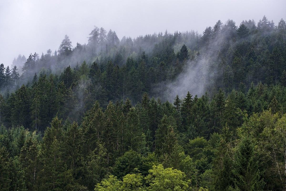 La transpiración y la respiración de las planas no son lo mismo