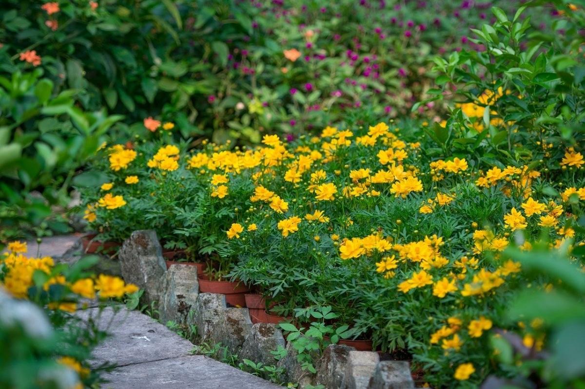 Planta algunas flores en macetas en tu jardín
