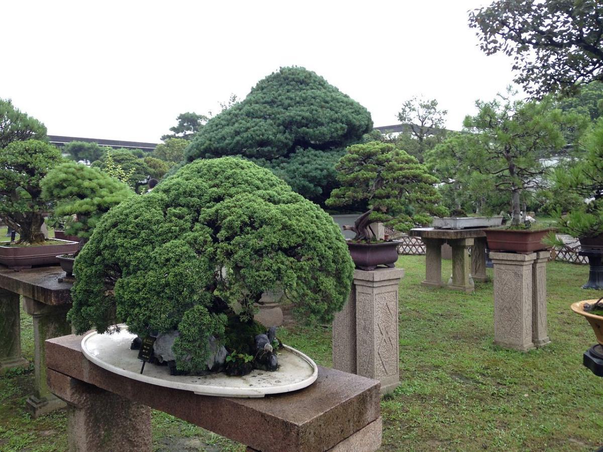 Tu jardín japonés pequeño puede ser de macetas