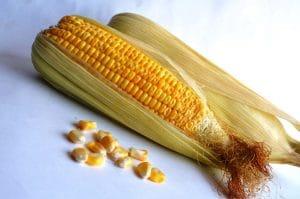 El maíz es un cultivo de secano