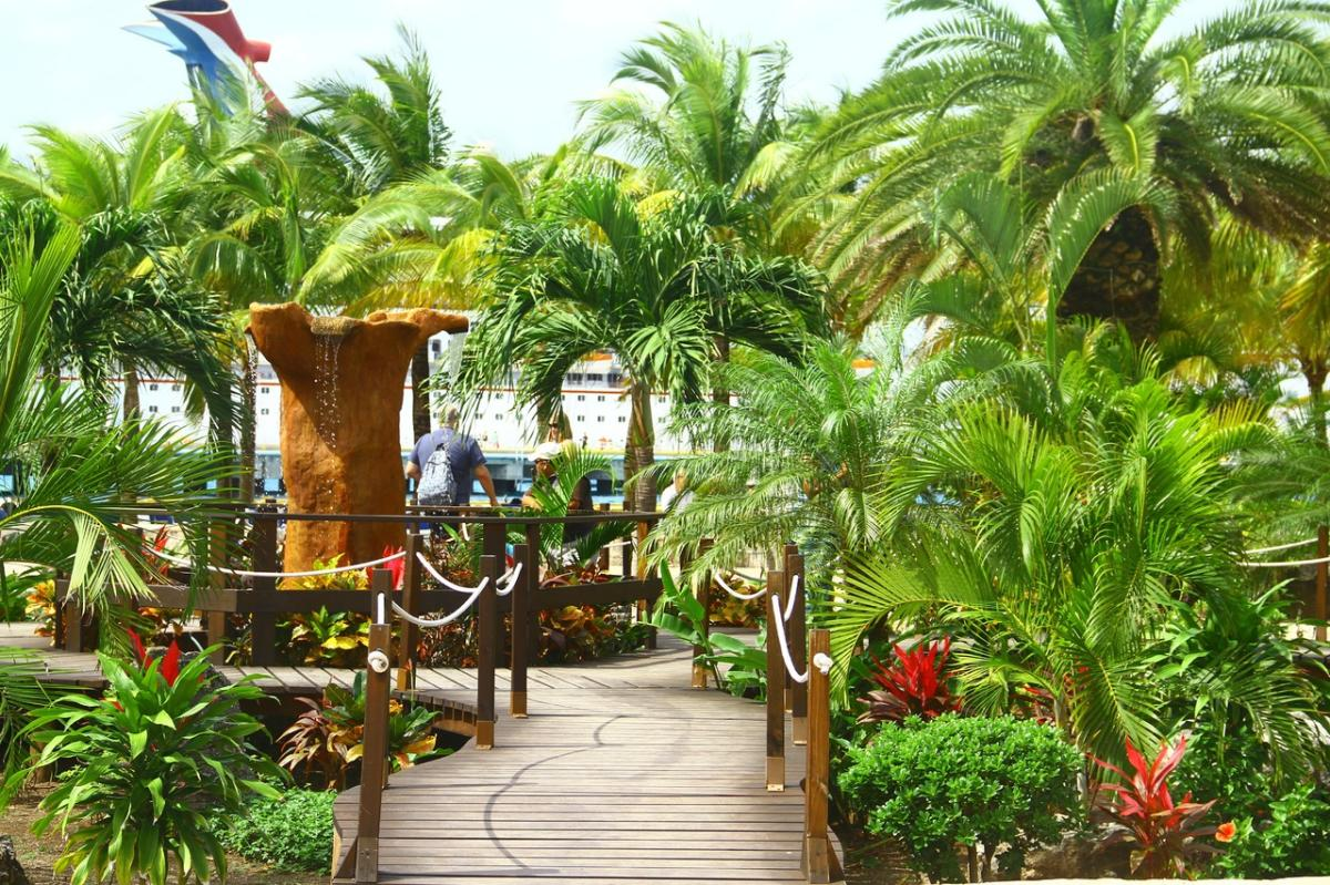 Hay muchas palmeras de exterior ideales para un jardín