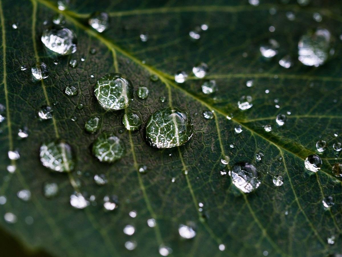 Existen varios tipos de transpiraciones vegetales