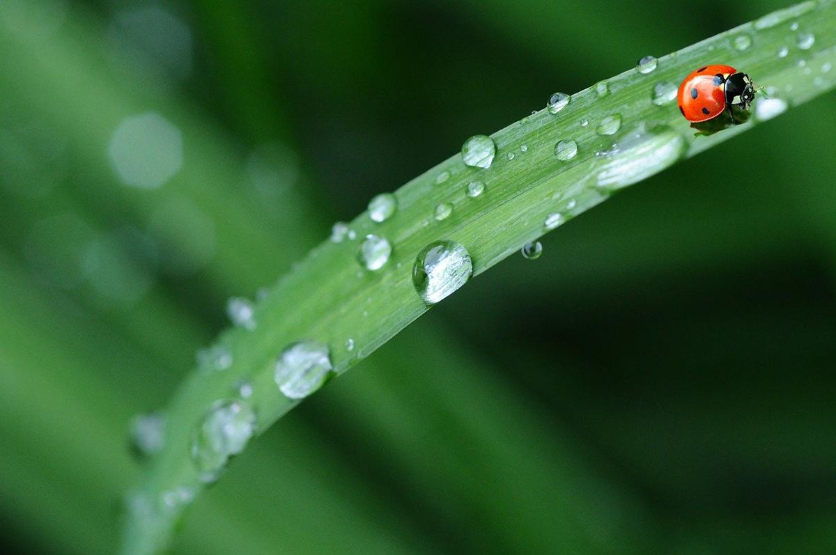 Los factores que influyen en la transpiración de las plantas son las propiedades del agua y la anatomía interna del vegetal