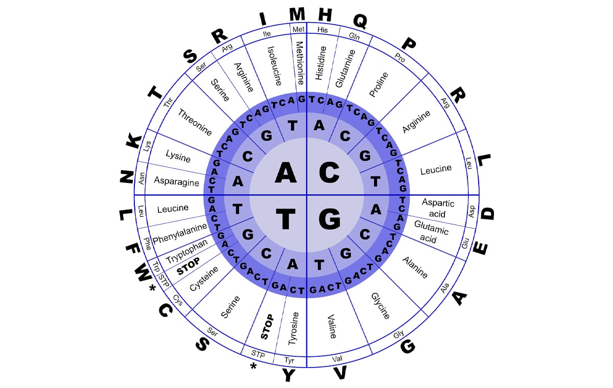 Las proteínas están formadas por aminoácidos
