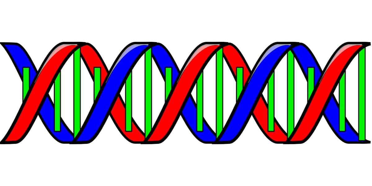 Los ribosomas son esenciales en el código genético
