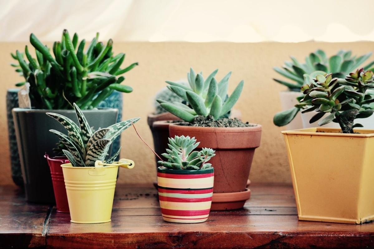 Plantar es colocar plantas en un sitio determinado