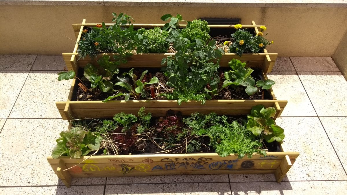 variedad de cultivos en casa