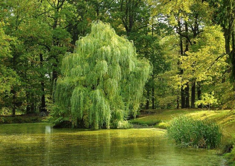 Hay varios árboles que crecen junto a un río